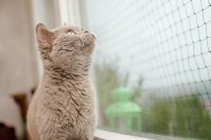 Gatos y ventanas seguridad