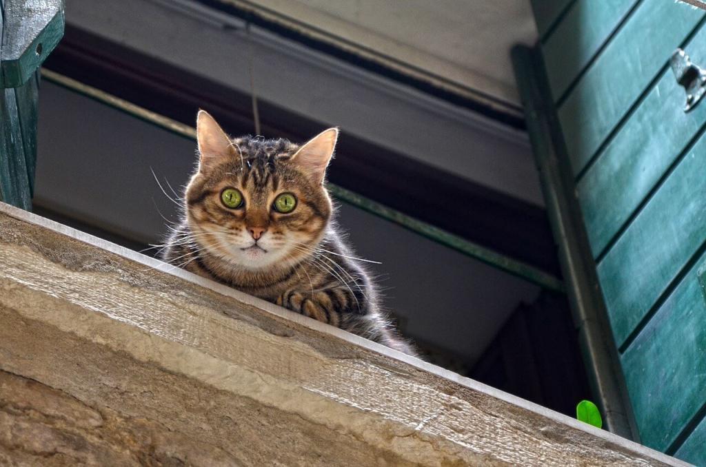 Ventanas y gatos