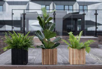 Huerto urbano balcón
